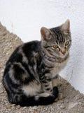 O gato interessante e bonito da rua representa apropriado para anunciar e projeta-o Fotos de Stock Royalty Free