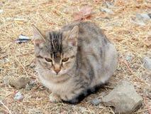 O gato interessante e bonito da rua representa apropriado para anunciar e projeta-o Fotografia de Stock Royalty Free