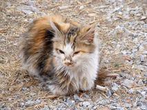 O gato interessante e bonito representa apropriado para propagandas e projetos Foto de Stock Royalty Free