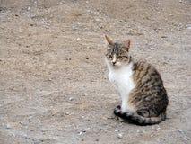 O gato interessante e bonito representa apropriado para propagandas e projetos Imagens de Stock