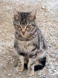 O gato interessante e bonito representa apropriado para propagandas e projetos Foto de Stock