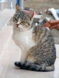 O gato interessante e bonito representa apropriado para propagandas e projetos Fotos de Stock Royalty Free