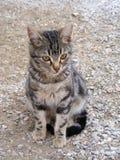 O gato interessante e bonito representa apropriado para propagandas e projetos Fotografia de Stock Royalty Free