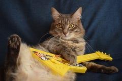 O gato joga uma guitarra do brinquedo foto de stock