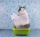 O gato lê o jornal de manhã ao sentar-se no toalete imagens de stock