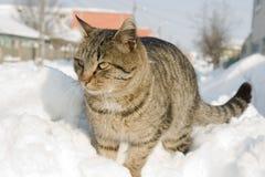 O gato listrado escalou em um montão da neve Imagem de Stock