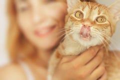 O gato louco lambe o nariz Fotos de Stock