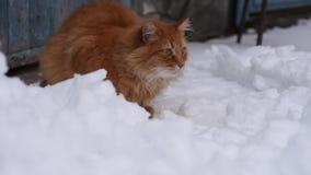 O gato macio vermelho grande senta-se na rua no meio da neve filme