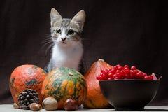 O gato malhado da cor da vaquinha da vida do destilador do outono senta-se em um pano de saco atrás de t imagens de stock royalty free