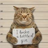 O gato mau quebrou uma garrafa da gim Fotos de Stock