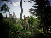 O gato modelo está modelando Imagens de Stock Royalty Free
