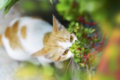 O gato ? muito bonito no jardim imagens de stock royalty free