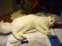 O gato não me deixará estudar Imagem de Stock