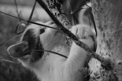O gato na árvore Fotografia de Stock Royalty Free