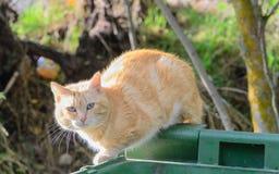 O gato na borda do recipiente Fotos de Stock Royalty Free