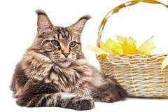 O gato na grama Foto de Stock