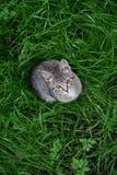 O gato na grama Fotos de Stock Royalty Free