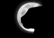 O gato na lua Fotos de Stock