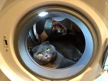 O gato na máquina de lavar Fotografia de Stock