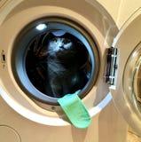 O gato na máquina de lavar e na peúga Imagem de Stock Royalty Free