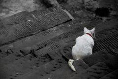 O gato nas escadas Foto de Stock