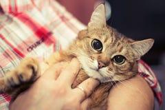 O gato nas mãos da saliência Fotografia de Stock