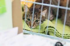 O gato no abrigo animal do animal de estimação salvou perdido indesejável apronta-se para a adoção foto de stock