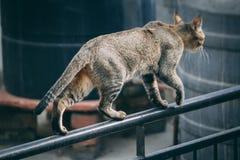 O gato no balcão foto de stock
