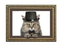 O gato no chapéu e no laço olha fora da moldura para retrato Imagem de Stock Royalty Free