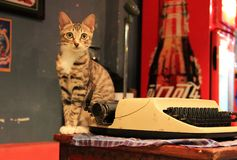 O gato no hotel fotografia de stock royalty free