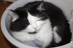 O gato no tanque Fotografia de Stock
