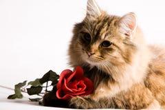 O gato novo está pedindo Fotografia de Stock Royalty Free