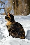 O gato novo senta-se na neve branca no inverno Foto de Stock