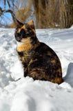 O gato novo senta-se na neve branca no inverno Fotos de Stock Royalty Free