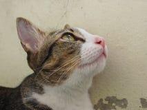 O gato olha acima Imagem de Stock