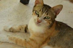 O gato olha acima imagem de stock royalty free