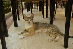 O gato olha acima Imagens de Stock