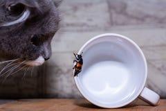O gato olha o besouro que está rastejando na caneca imagens de stock