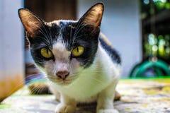 O gato olha fixamente no rato Ou fiscalização fotografia de stock royalty free
