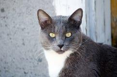 O gato olha fixamente para baixo Imagens de Stock