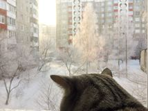 O gato olha na janela Fotos de Stock Royalty Free