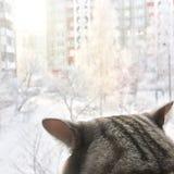 O gato olha na janela Imagem de Stock Royalty Free