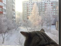 O gato olha na janela Fotografia de Stock Royalty Free