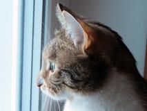 O gato olha para fora a janela imagem de stock