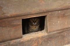 O gato olha para fora o entalhe II da porta Fotografia de Stock Royalty Free