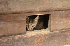 O gato olha para fora o entalhe III da porta Imagens de Stock