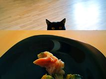 o gato olha peixes na placa preta na tabela imagens de stock royalty free
