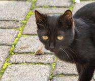 O gato pequeno Imagem de Stock