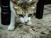 O gato pequeno bonito Imagens de Stock