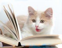 O gato pequeno leu um livro Fotos de Stock